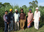 Amrik Singh and colleagues with SSI crop in Punjab